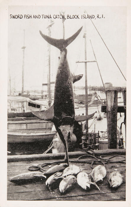 Swordfish and Tuna Catch, Block Island, R.I.