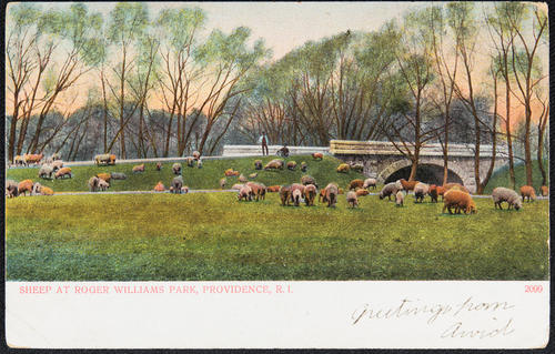 Sheep at Roger Williams Park, Providence, R.I.