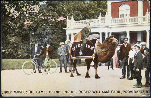 """Holy Moses"", the Camel of the Shrine, Roger Williams Park, Providence, R.I."