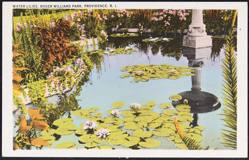 Water lilies, Roger Williams Park, Providence, R.I.