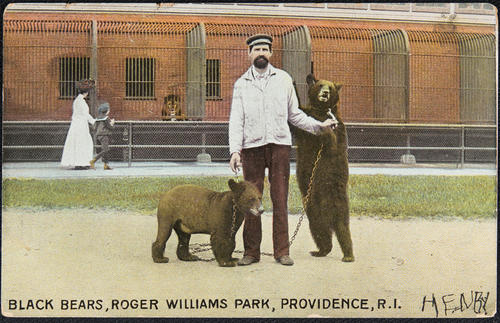 Black bears, Roger Williams Park, Providence, R.I.